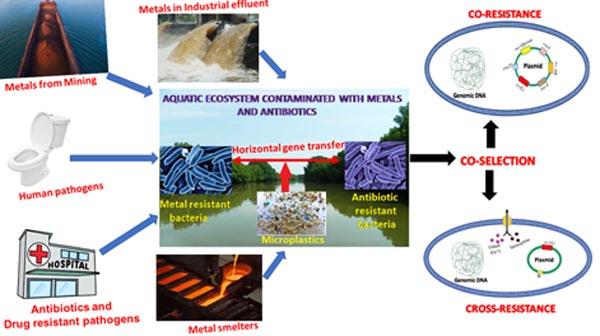 जीवाणुओं को एंटीबायोटिक-प्रतिरोधी बनाने के लिए जिम्मेदार कारक