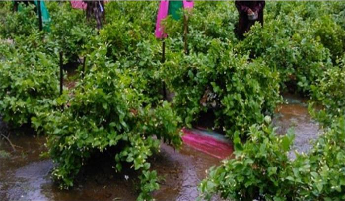 छत्तीसगढ़:ग्रामीण कृषि मौसम सेवा राष्ट्रीय परियोजना का आयोजन