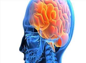 मस्तिष्क के विकास का असली कारण क्या है?