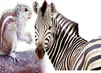 कैसे पाईं जेब्रा और गिलहरी ने शरीर पर धारियां?