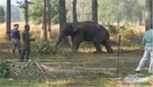 15 हाथी 9 किसानों की 8 एकड़ में लगी फसल रौंदी