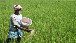 सभी किसानों के सभी बकाया कर्जे माफ किए जाएं  माकपा