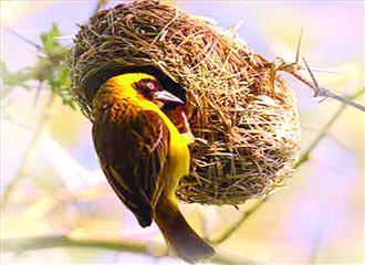 विकट हो गई है पक्षियों के आवास की समस्या