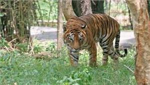 असमराष्ट्रीय उद्यान में वन्यकर्मियों ने2 शिकारियों को मार गिराया