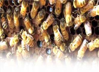 मधुमक्खी पालन  कम लागत और अधिक मुनाफा