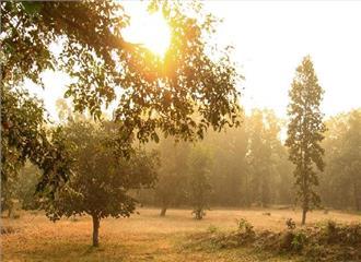 मध्य प्रदेश में धूप के साथ दिन की शुरुआत