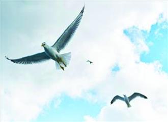 पक्षियों में नए की चाहत