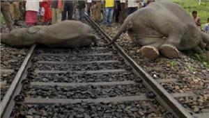 झारखंडट्रेन की चपेट में आने से हाथी की मौत