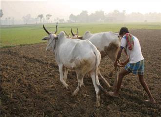 चंपारण के किसानों की मांगों के लिए न्याय जरूरी