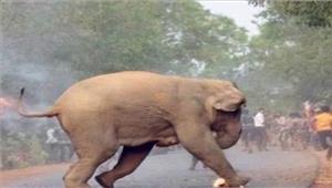 चीन  हाथी ने 2 वाहनों को नुकसान पहुंचाया