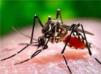 मलेरिया से निपटने को प्रतिबद्धअफ्रीका देशों में जैव-चिकित्सा अनुसंधान