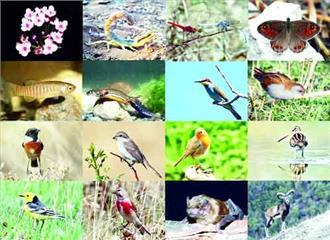जैव विविधता पर संकट? कई प्रजातियां खतरे में
