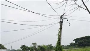 बिजली की चपेट में आने से दो दर्जन गोवंश की मौत