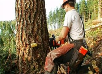 मत काटो उन पेड़ों को, जो हैं पिता तुल्य