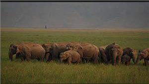जिम काॅर्बेट राष्ट्रीय उद्यान में 1हाथी की मौत