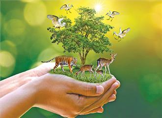 पर्यावरण संरक्षण की राह क्या हो