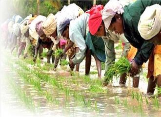 खेती में रोजगार के अवसर