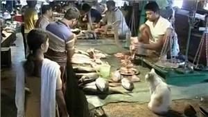 बूचड़खानों के खिलाफ कार्रवाई के चलते  असमंजस में मछली विक्रेता