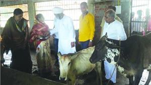 पूर्व मंत्री माधव सिंह ध्रुव ने किया गौशाला का निरीक्षण