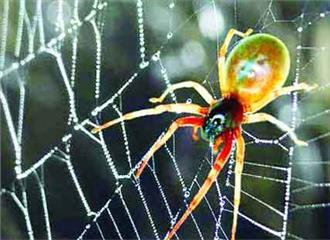 बहुत बढ़िया शिकारी होती हैं मकड़ियां