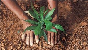 पौधा रोपण कर बच्चों ने पर्यावरण के प्रति किया जागरूक