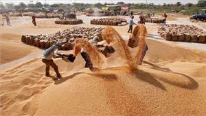 हरियाणा की मंडियों में 7283 लाख टन से अधिक गेहूँ की आवक