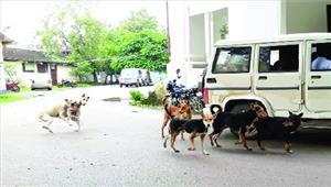 24 घंटे के अंदर 29 लोग हुए एक पागल कुत्ते के शिकार