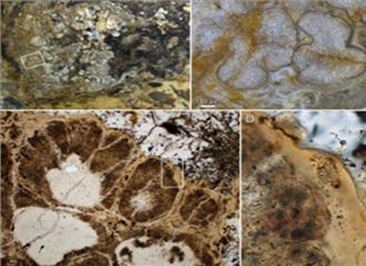 भारत में मिले 1.6 अरब साल पुराने जीवाश्म