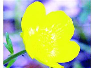 खुद को गर्म रखता है यह फूल