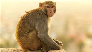 कर्नाटक  2 साल के बच्चे का बंदरों से लगाव बना आकर्षण का केंद्र