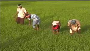 कर्नाटक सरकार नेकिसानों के फसल ऋण माफ करने का फैसला किया