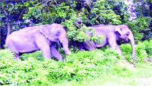 हाथियों से हो रहा आमना-सामनादहशत में ग्रामीण