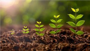 मध्यप्रदेश मेंएक दिन में रोंपे गए छह करोड़ से ज्यादा पौधे