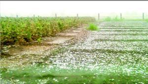 मध्यप्रदेश  किसान ने की आत्महत्या