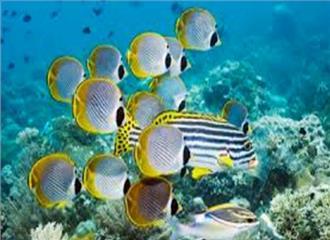 समुद्री तेल रिसाव से लुप्त होती मछलियों की प्रजातियाँ
