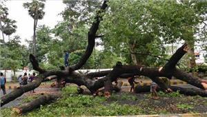बिहार में आंधी-तूफान से फसलों काव्यापक नुकसान