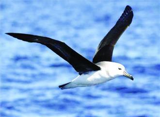 लाखों टन नाइट्रोजन उर्वरक लाते हैं समुद्री पक्षी