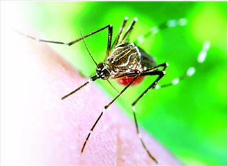मच्छर मारने के तरीके