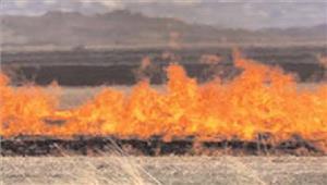 नरवाई जलाने वाले 10किसानों के खिलाफ कार्रवाई