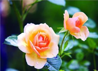 प्रकृति और पर्यावरण का संरक्षक हैे फूल