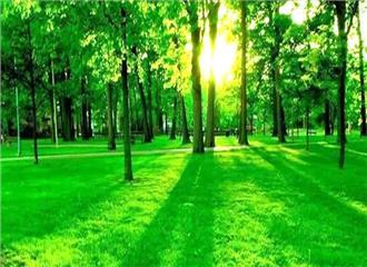 प्रकृति के साथ मिलकर करें विकास