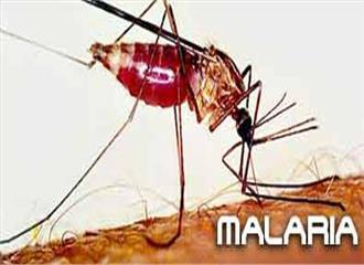 अब होगा आसानमलेरिया का इलाज