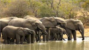 ओडिशा  हाथियों की संख्या में हुई वृद्धि