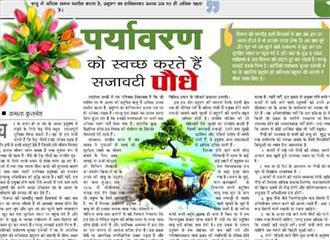 पर्यावरण को स्वच्छ करते हैं सजावटी पौधे
