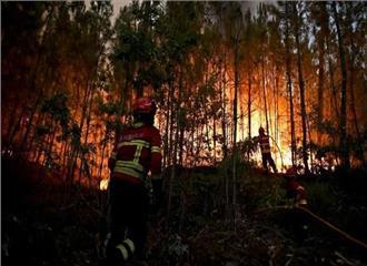 पुर्तगाल केजंगल में भीषण आग ,58 लोगों की मौत