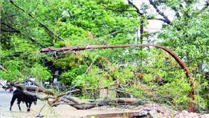 तेज आंधी से पेड़ गिरे बिजली व्यवस्था बाधित