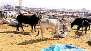 राजस्थान तीर्थराज पुष्कर में पशु मेला शुरु