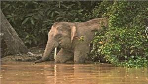 नदी के तेज बहाव में बहे एक हाथी की मौत