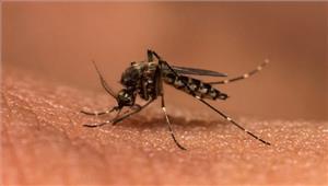 कोरंधा के दर्जनों ग्रामीण मलेरिया से पीड़िता