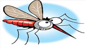 अब नुक्कड़ नाटक के जरिए मच्छर जनित बीमारियों की रोकथाम करेगी निगम